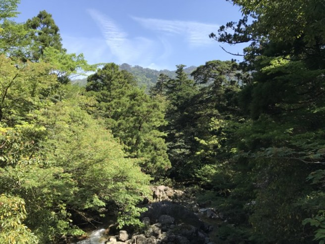 Hiking 8.5.17 - Jomon Sugi yakushima (50)