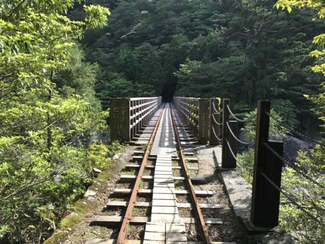 Hiking 8.5.17 - Jomon Sugi yakushima (53)
