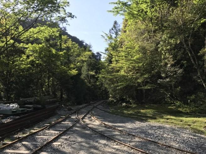 Hiking 8.5.17 - Jomon Sugi yakushima (58)