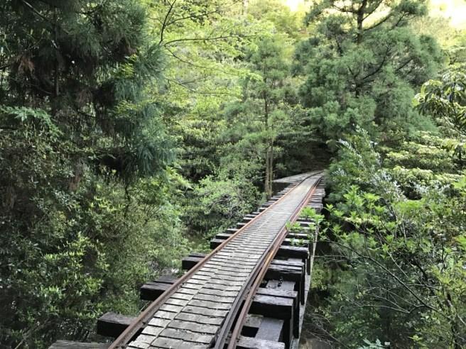 Hiking 8.5.17 - Jomon Sugi yakushima (7)