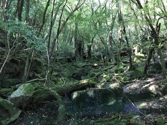 Hiking 8.5.17 - Jomon Sugi yakushima (8)