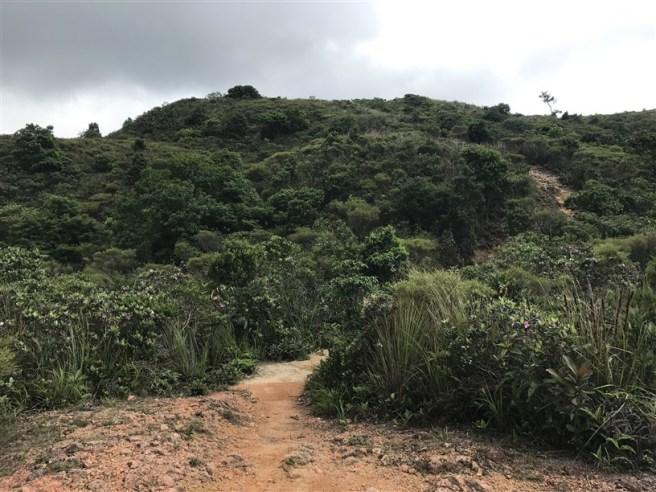 Hiking 4.6.17 Lo Tei Tun (10)