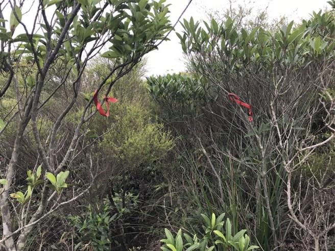 Hiking 4.6.17 Lo Tei Tun (27)