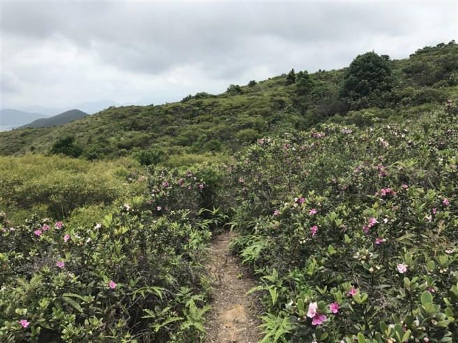 Hiking 4.6.17 Lo Tei Tun (29)