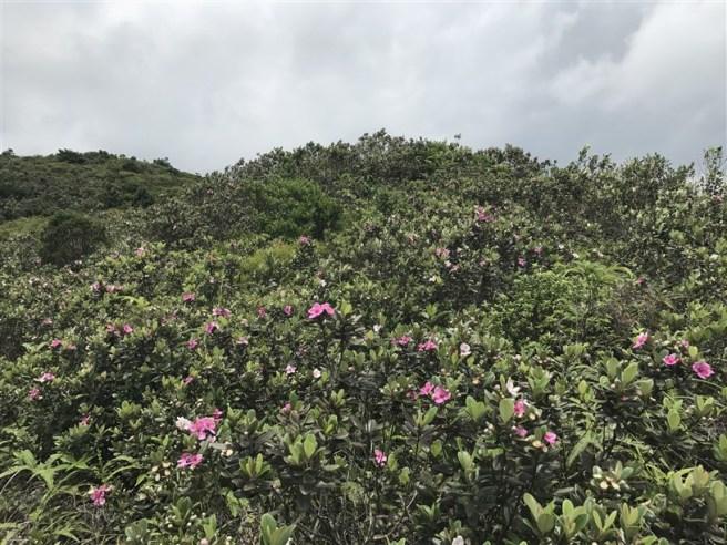 Hiking 4.6.17 Lo Tei Tun (30)