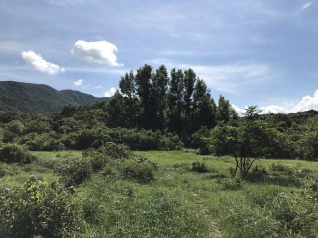 Hiking 1.7.17 Tiu Tang Lung (1)