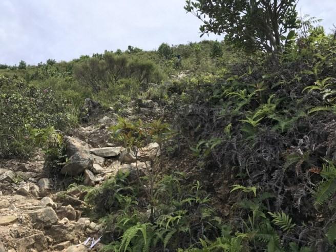 Hiking 1.7.17 Tiu Tang Lung (12)