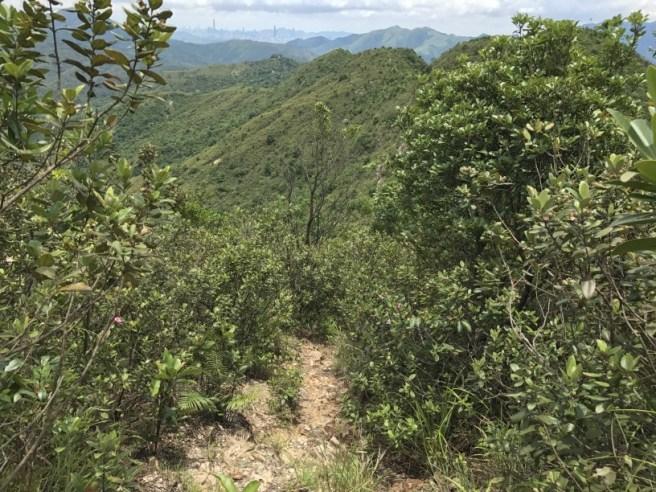 Hiking 1.7.17 Tiu Tang Lung (33)