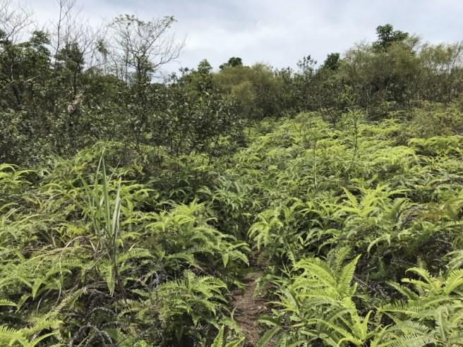 Hiking 1.7.17 Tiu Tang Lung (36)