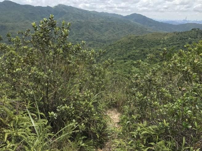 Hiking 1.7.17 Tiu Tang Lung (42)