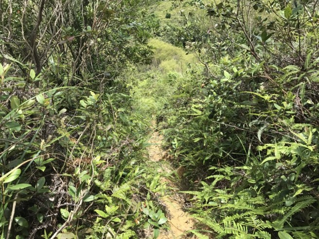 Hiking 1.7.17 Tiu Tang Lung (43)