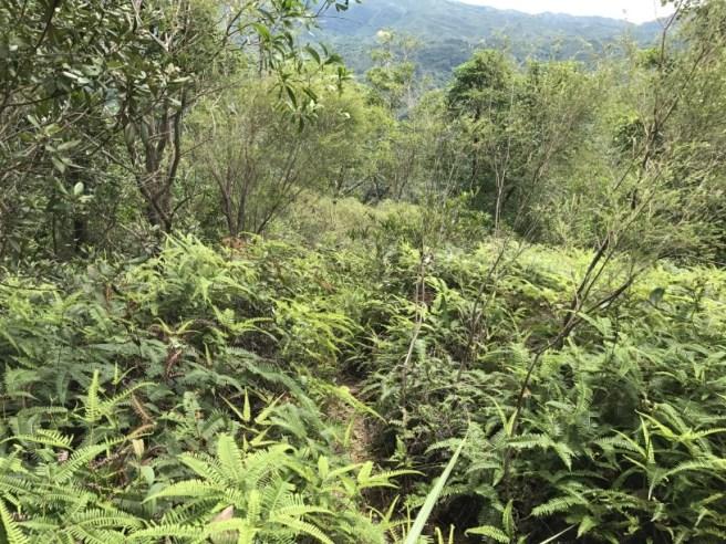 Hiking 1.7.17 Tiu Tang Lung (45)