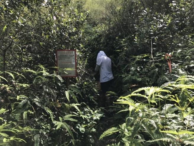 Hiking 1.7.17 Tiu Tang Lung (5)