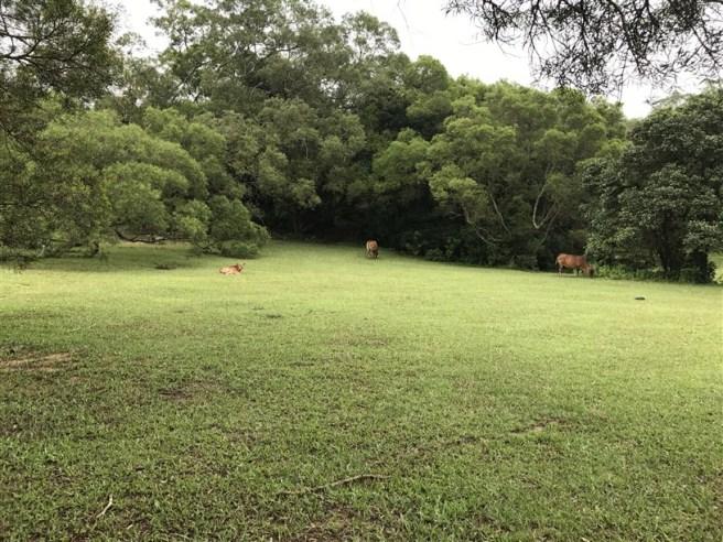 hiking 15.7.17 Nga Yee Shek Shan (14)