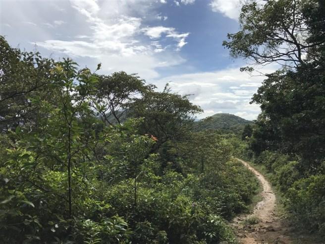 hiking 15.7.17 Nga Yee Shek Shan (19)