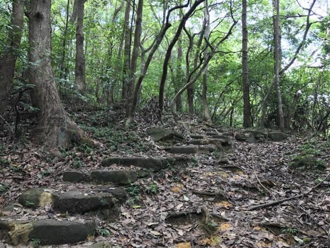 hiking 15.7.17 Nga Yee Shek Shan (5)