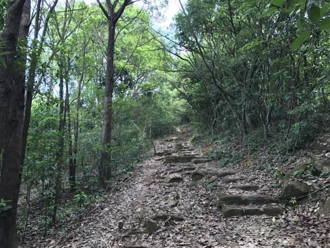 hiking 15.7.17 Nga Yee Shek Shan (6)
