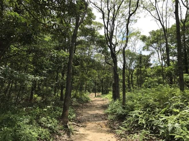 hiking 15.7.17 Nga Yee Shek Shan (9)