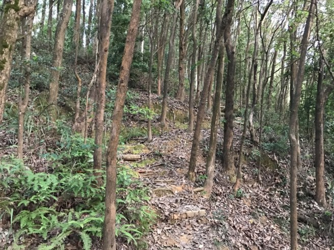 Hiking 28.7.17 Shum Wan Shan (18)