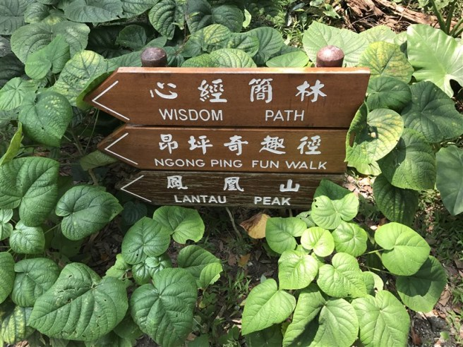 Hiking 30.7.2017 Nei Lak Shan (2)