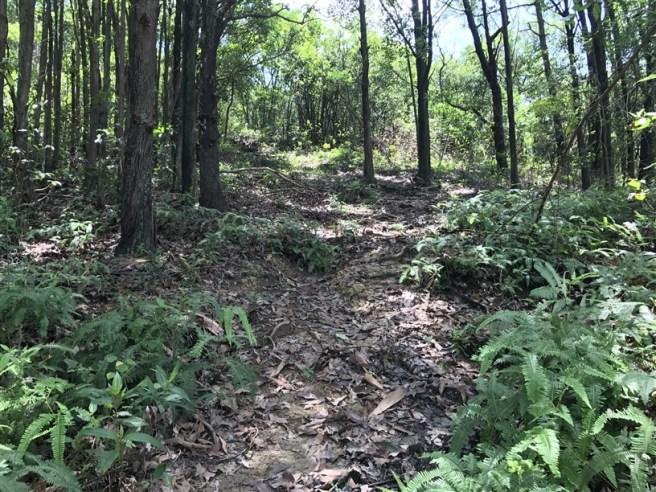 Hiking 9.7.17 Ngau Wu Tun (10)