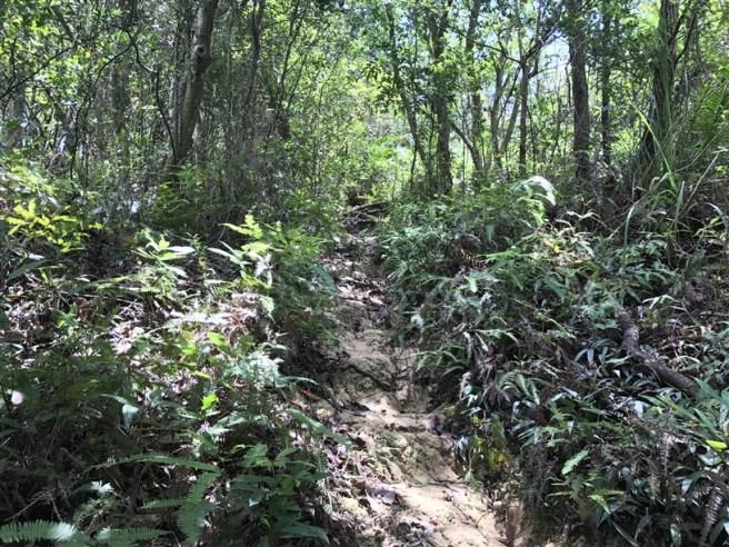 Hiking 9.7.17 Ngau Wu Tun (11)