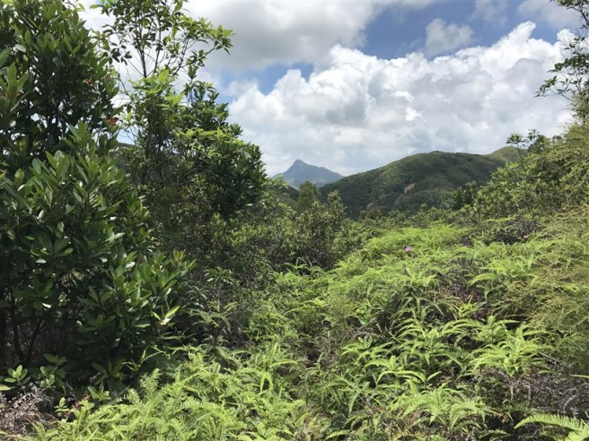 Hiking 9.7.17 Ngau Wu Tun (13)