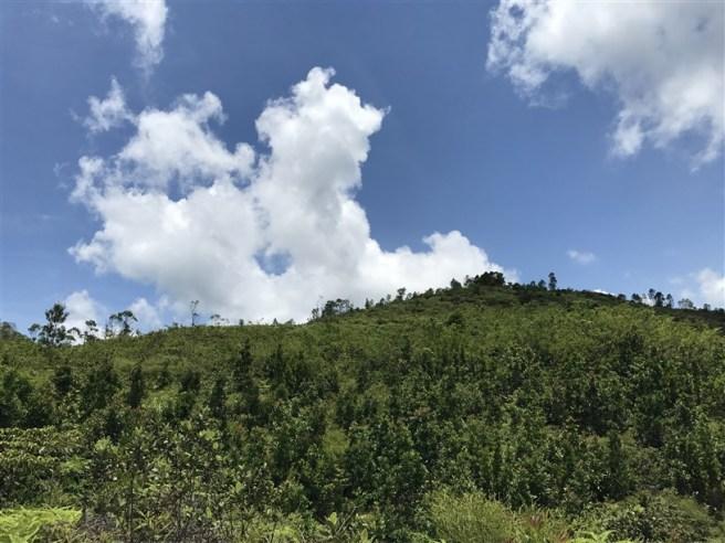 Hiking 9.7.17 Ngau Wu Tun (18)