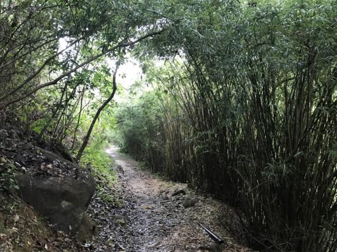 Hiking 5.8.2017 Sze Tei (1)