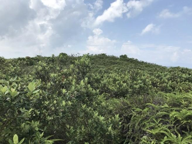 Hiking 5.8.2017 Sze Tei (28)