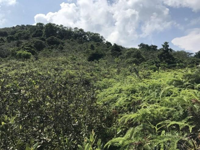 Hiking 5.8.2017 Sze Tei (36)