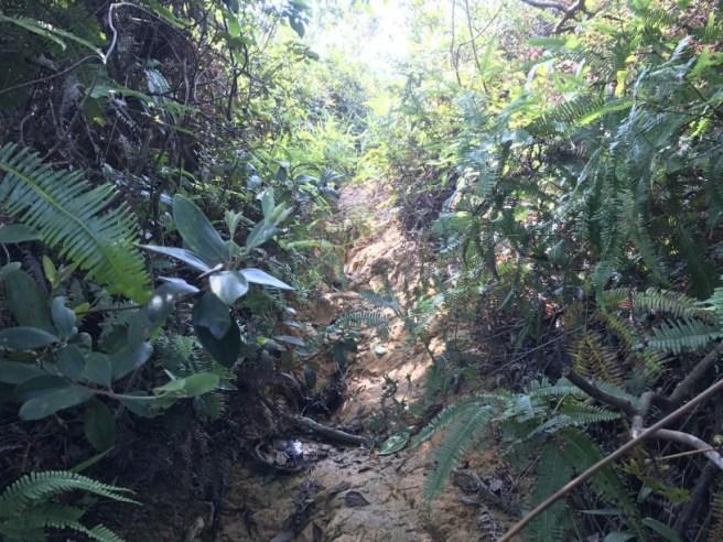 Hiking 5.8.2017 Sze Tei (37)