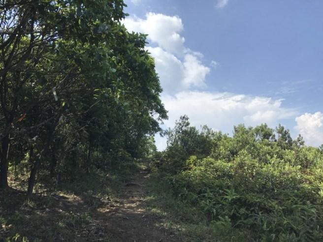 Hiking 5.8.2017 Sze Tei (43)
