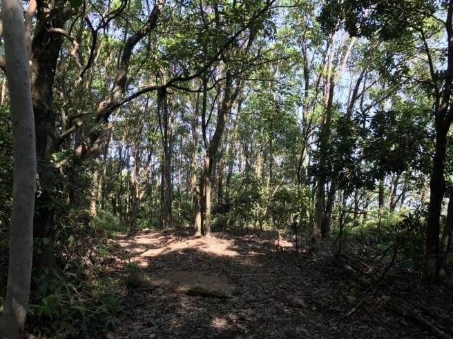 Hiking 5.8.2017 Sze Tei (46)