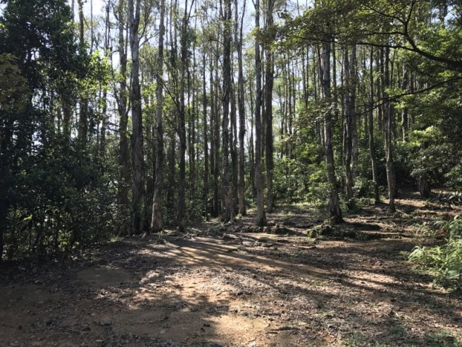 Hiking 5.8.2017 Sze Tei (48)