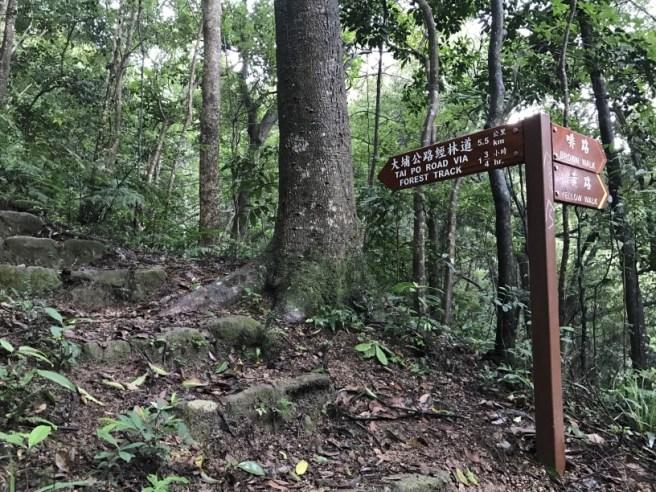 Hiking 23.9.17 Tai Po Kau Fire lookout (22)