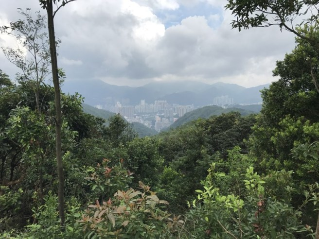 Hiking 23.9.17 Tai Po Kau Fire lookout (28)