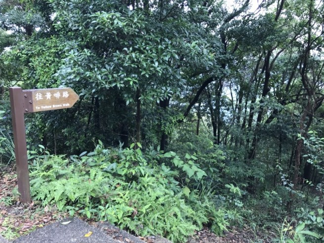 Hiking 23.9.17 Tai Po Kau Fire lookout (31)