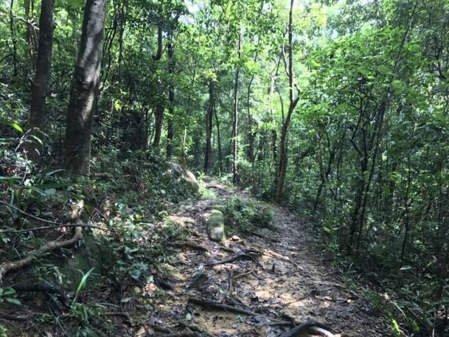 Hiking 23.9.17 Tai Po Kau Fire lookout (34)