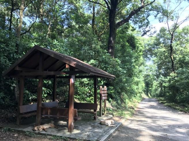 Hiking 23.9.17 Tai Po Kau Fire lookout (38)