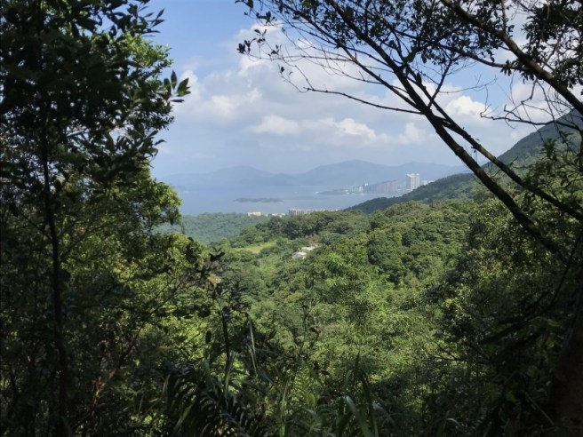 Hiking 23.9.17 Tai Po Kau Fire lookout (39)