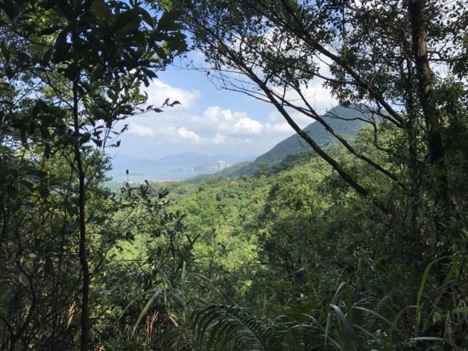 Hiking 23.9.17 Tai Po Kau Fire lookout (40)