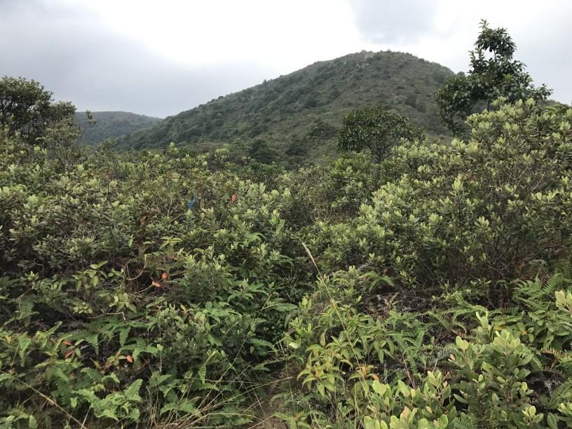 Hiking 11.11.2017 Lo Fu Kei Shek (17)