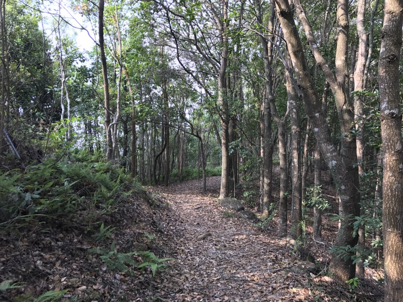 Hiking 11.11.2017 Lo Fu Kei Shek (3)