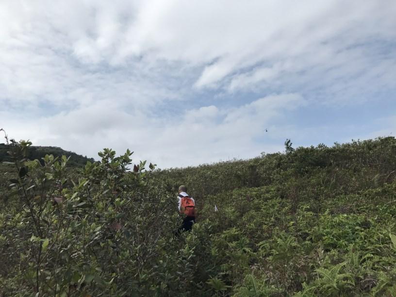 Hiking 11.11.2017 Lo Fu Kei Shek (34)