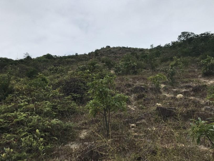 Hiking 11.11.2017 Lo Fu Kei Shek (42)