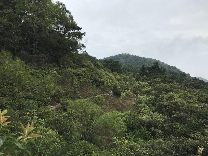 Hiking 11.11.2017 Lo Fu Kei Shek (47)