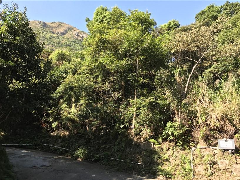 Hiking 26.11.2017 Kowloon Peak (71)