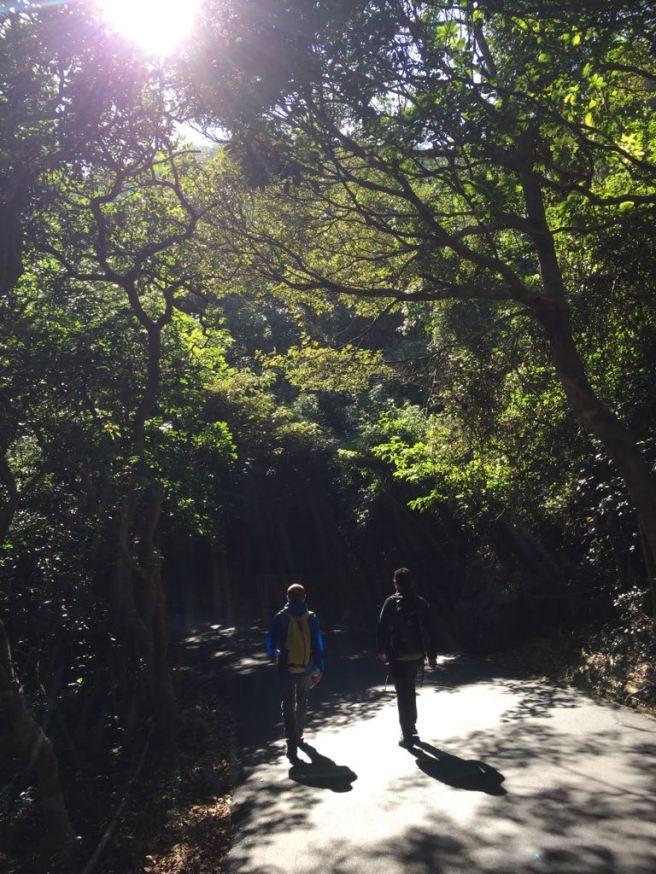 Hiking 26.11.2017 Kowloon Peak (75)