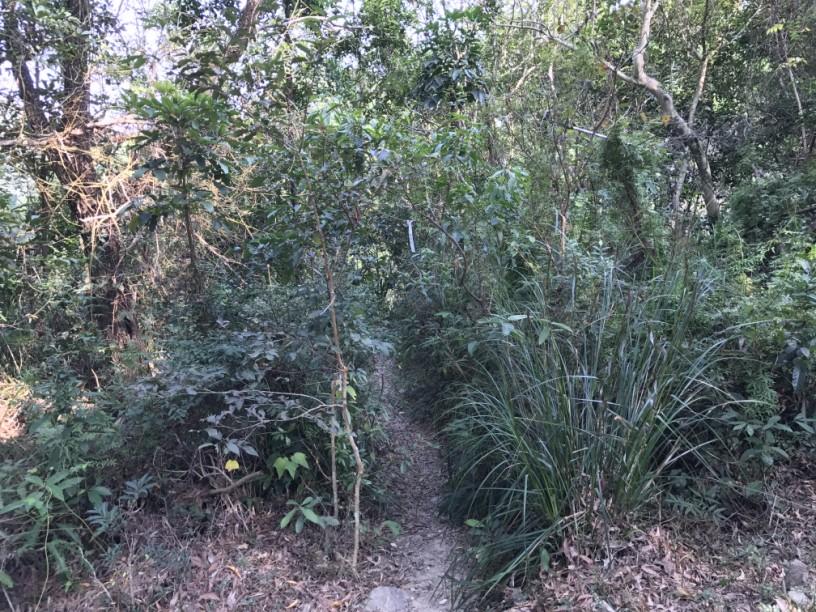 Hiking 6.12.2017 Shek Pan Tam (13)